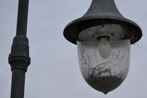 Look: a bird's nest in a broken lamp post! Safa Park, Dubai (April 2011)
