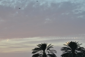 Flying birds at sunset (Dubai, 2011-04-23)