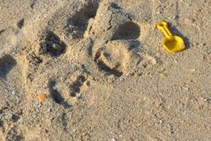 A left behind toy shovel on a Dubai beach in April. Who's missing this piece in their puzzle?