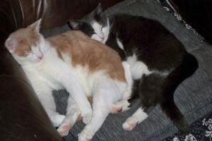 Busan och Morris vilar (P-Os bild)