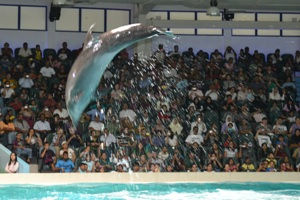 The dolphin jumps and splashes water (Dubai, June 3 2011)