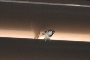 A small sparrow filled whole level in the parking with his song
